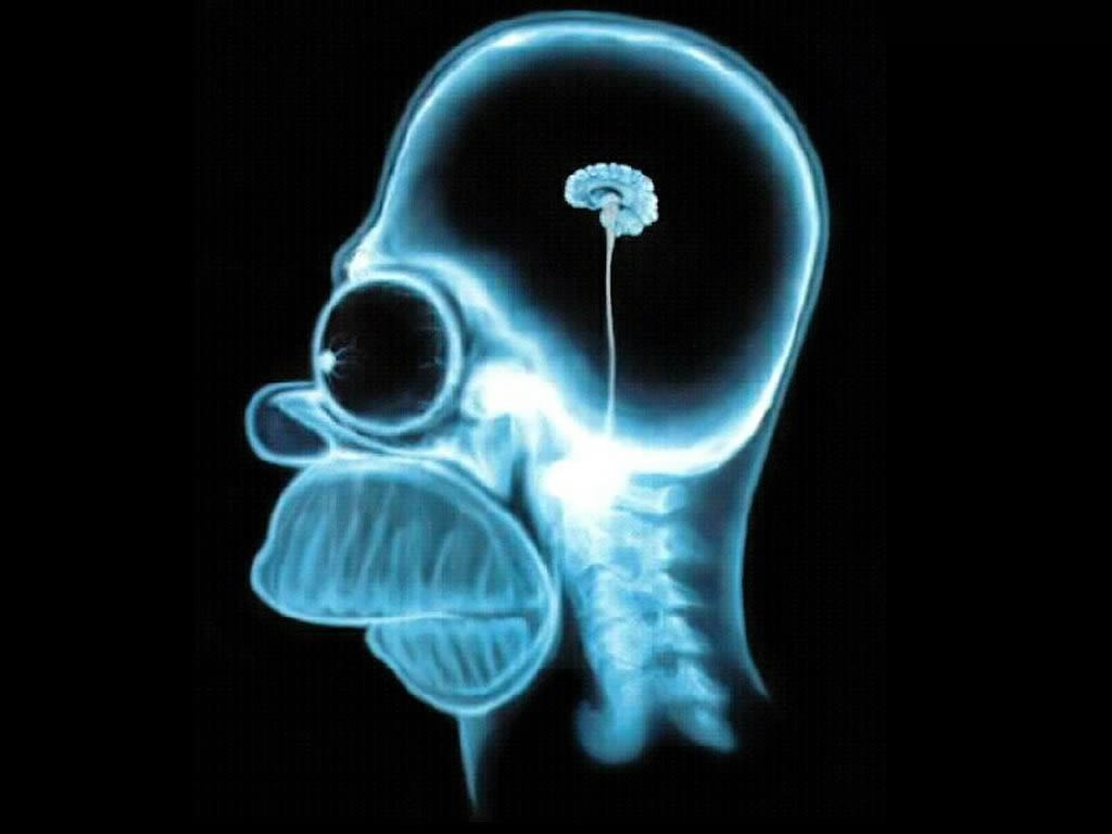 tinkering with our own brains blog of the long now